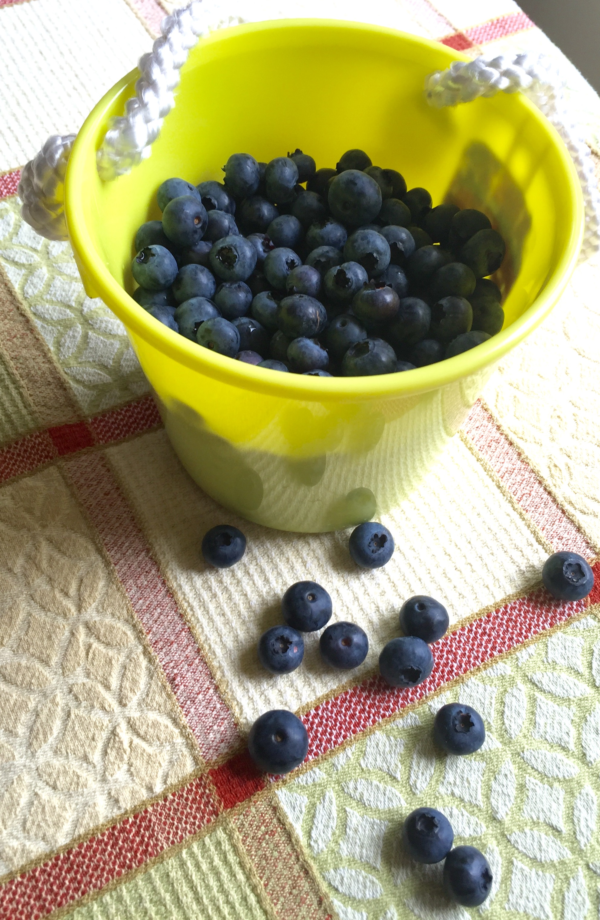 Child bucket with berries.jpg